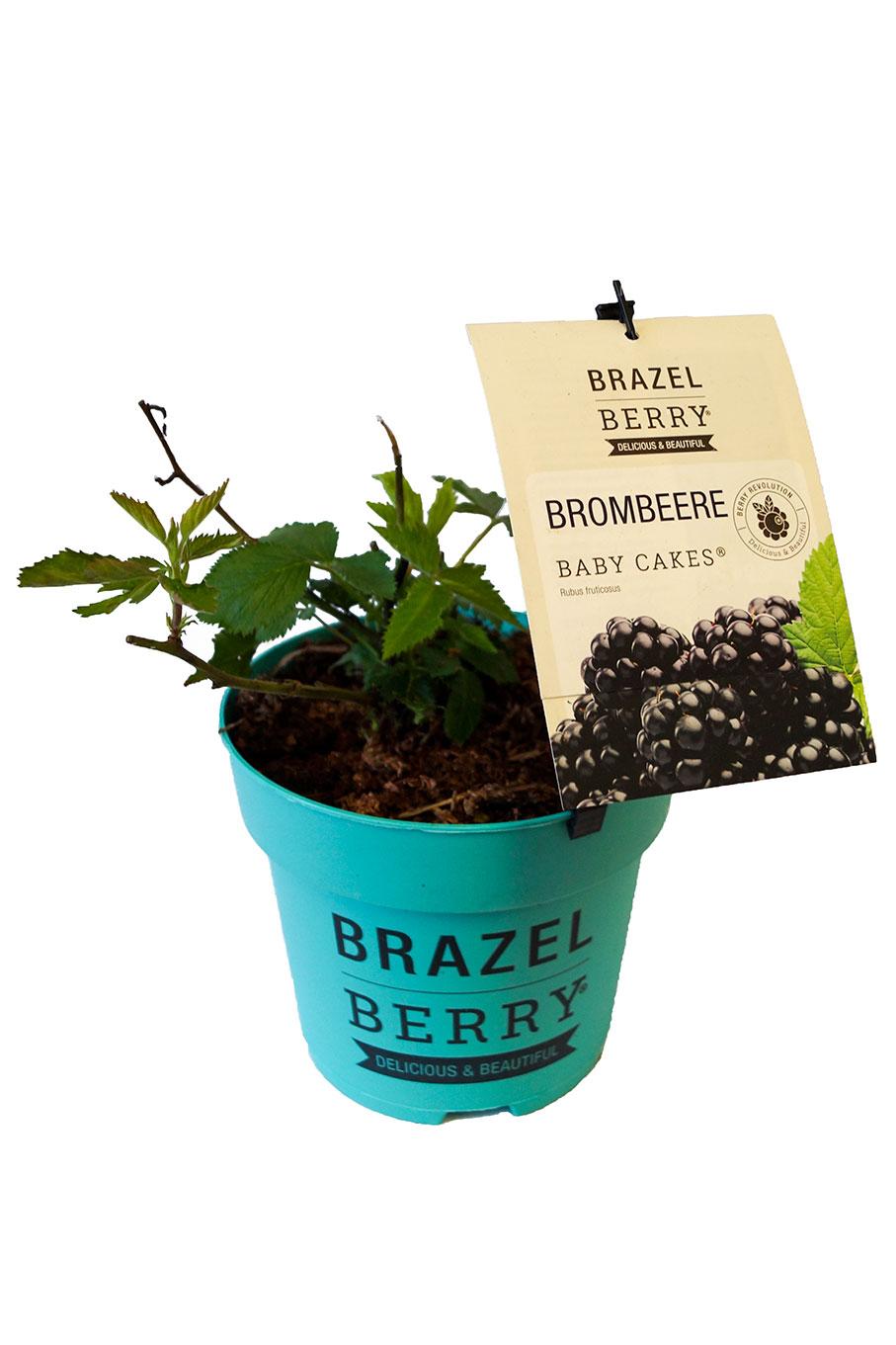 Brazel Berry Brombeere Baby Cakes
